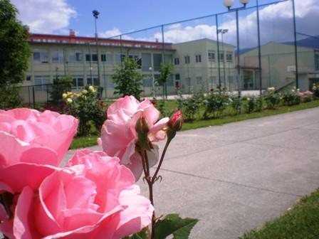 Naša škola2